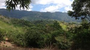 24 Acre Water Rich Farm Ranch Property in Ciudad Cortes