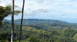 Two Large Land Parcels in Tinamastes with Fertile Soil