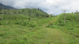 290 Acre Ranch in Southern Costa Rica Near Osa Penninsula