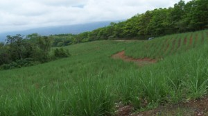 807 Acre Costa Rica Agricultural Ranch With Highway Frontage