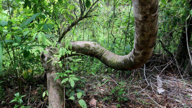 Wild Rainforest Setting