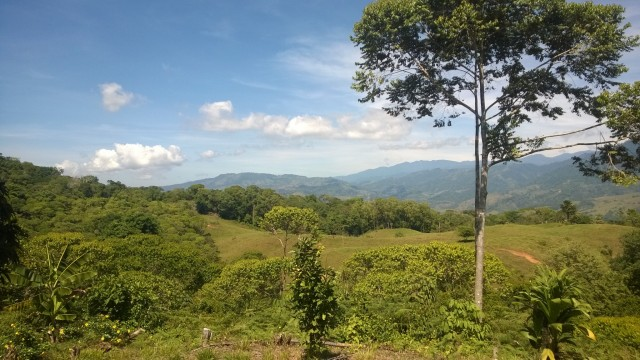 Affordable Land Parcels Close To Dominical
