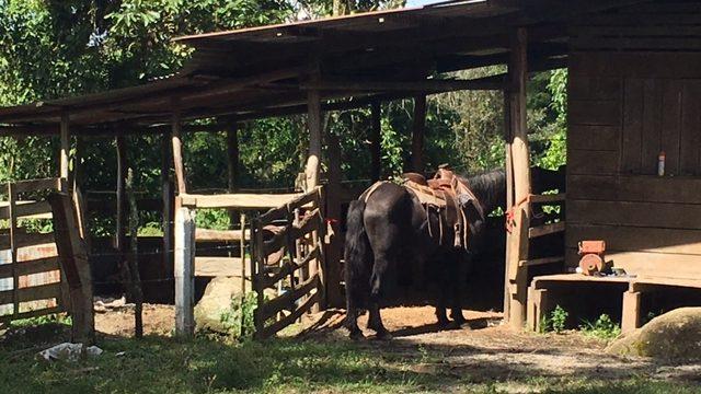 Cattle Ranch In Costa Rica
