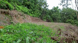 Two Acre Home Site Bordering A Creek In The Lagunas Community