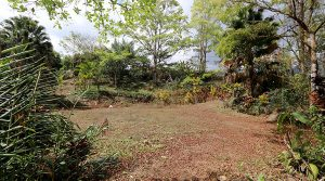Forested Home Site With Creek In Quebradas Near Downtown San Isidro