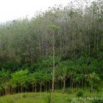 Teak Farm In Costa Rica