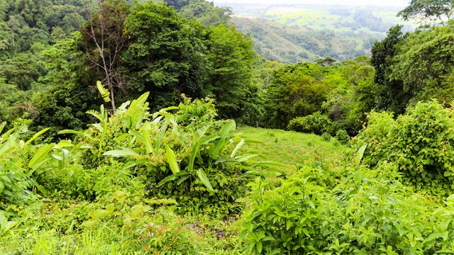 12.5 Acre Property Above Playa Hermosa