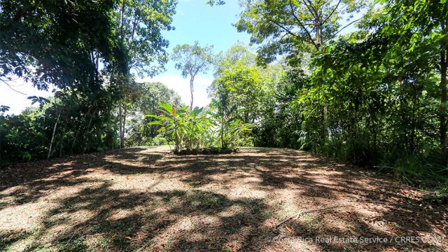 8.5 Acres in Dominical