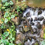 Rainforest Retreat Bordering Creeks