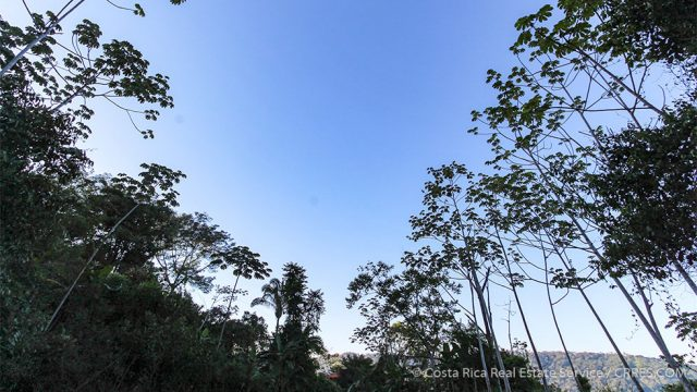 Tropical Surrounding