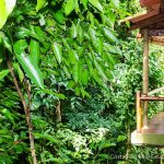 Rainforest Balconies