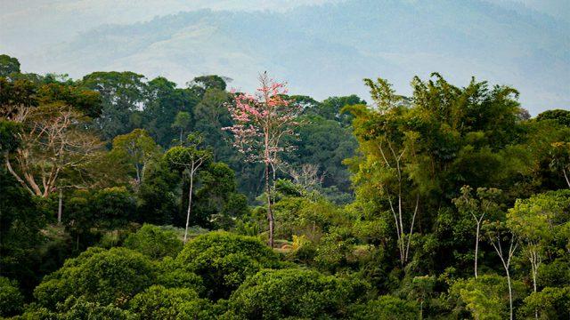 Beautiful Rainforest Views