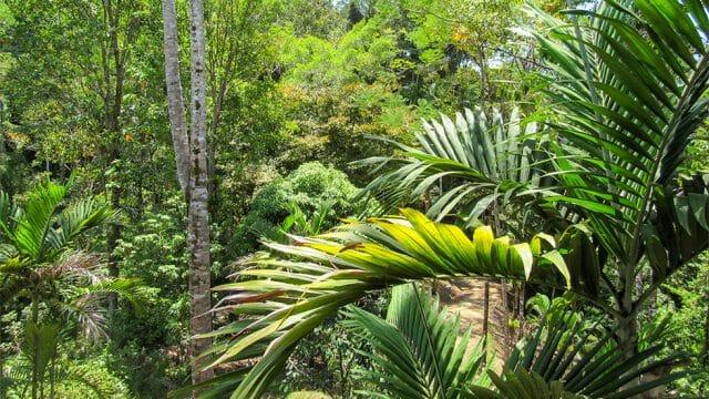 Tropical Rainforest Setting