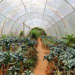 No Pesticides Used