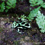 Colorful Exotic Wildlife