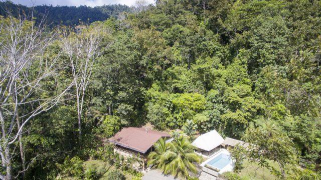 Private Jungle Setting
