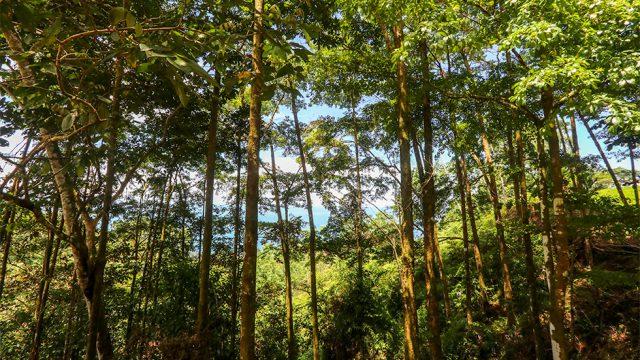 Lush Jungle Setting