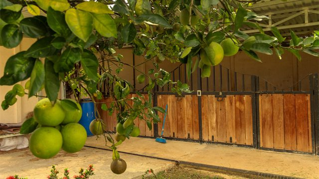 Organic Fruit Trees