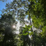 Lush Tropical Canopy