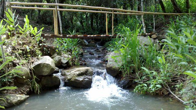 Freshwater Creeks