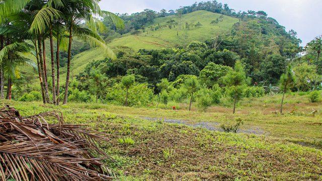 Tinamaste Hill Views