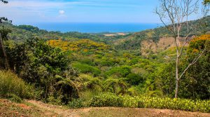 Unobstructed Ocean View Building Site with Fruit Trees in Lagunas