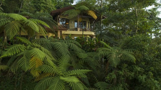 2.69-Acre Property with Lush Rainforest Setting