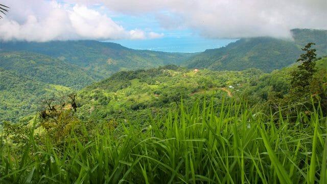 Ocean View Farmland