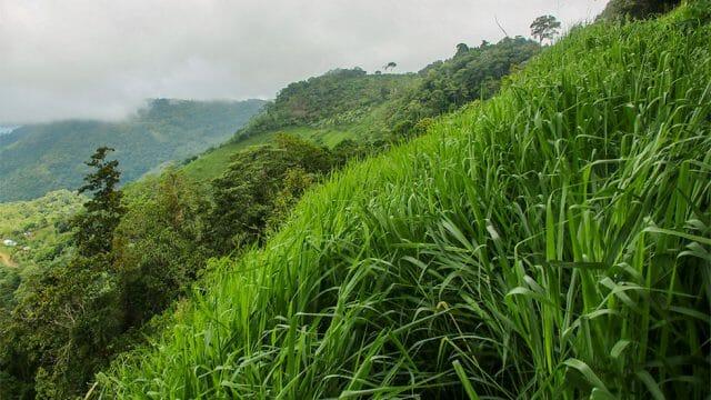 Lush Farmland