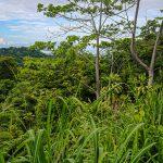 Jungle Surroundings