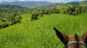 192 Acre Horse Ranch With River Frontage Near Hatillo