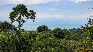 Family First: Building Lot with Whale's Tail Ocean View in San Josecito