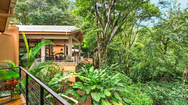 Nestled in the Rainforest