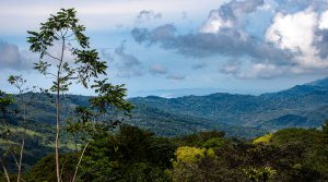 11+ Acres with Ocean View and Multiple Building Sites in San Salvador