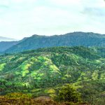 Forested Mountain Views