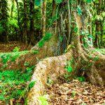 Rainforest Reserves