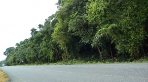 16 Acre Commercial Parcel Near Hospital de Osa in San Buenas