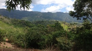 24 Acre Water Rich Farm Ranch Property in Ciudad Cortes