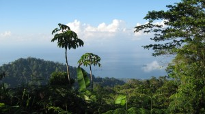 Finca Bajo Las Bonitas with 36 Hectares of Virgin Jungle