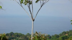 Over a Half Acre of Ocean View Land in Escaleras Dominical