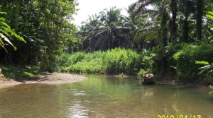 25 Acre Palm Oil Farm with 2 Bed 2 Bath Home On Site
