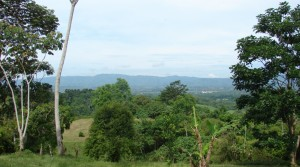 28 Acre San Isidro Farm Property with Perfect Climate