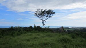 24 Acre Ocean View Farmland For Development in the Hills of Hatillo