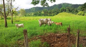412 Acre Cattle Farm With Fresh Water Source In Parrita