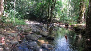 16 Acre Farmland With Fresh Water Streams in Las Tumbas