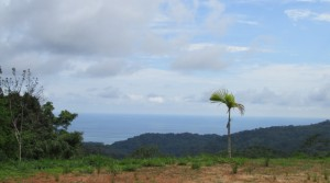 Ocean View Land In The Hills With Tropical Fruit Trees In Platanillo