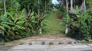 Great Building Site With Land For A Home and a Small Farm in Platanillo