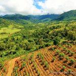 Very Fertile Land for Farming