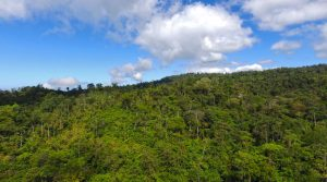 770 Acres In Southern Costa Rica With Vital Wildlife Corridors
