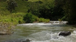 Finca El Roble 65 Acre Riverfront Cattle Ranch Near San Isidro del General